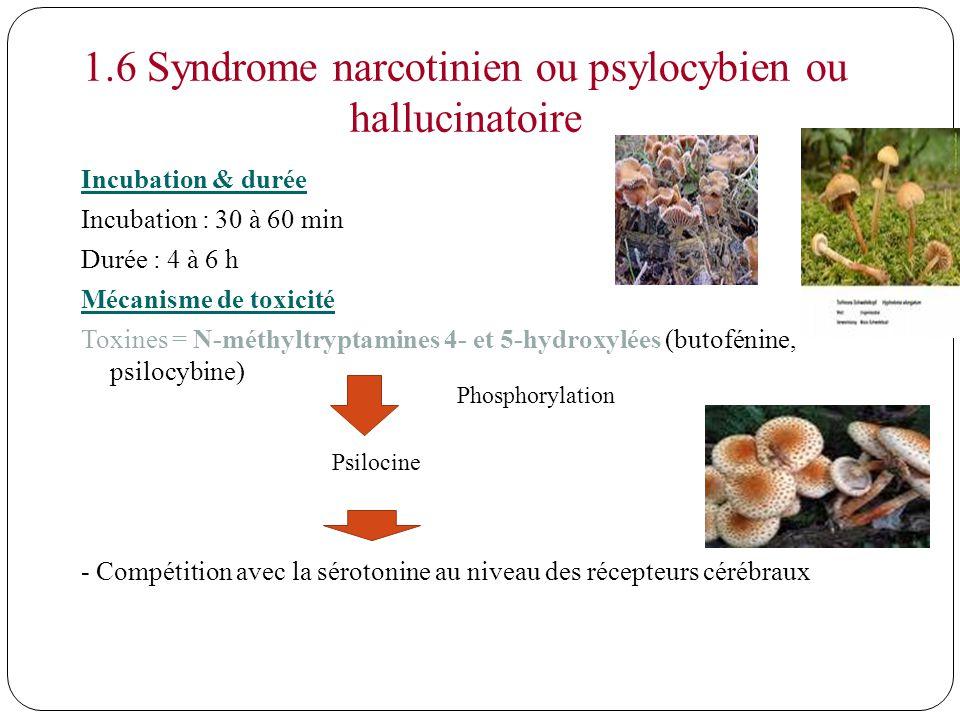 1.6 Syndrome narcotinien ou psylocybien ou hallucinatoire