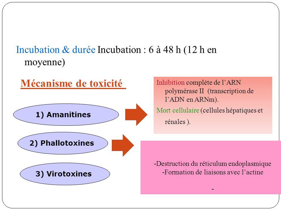 Incubation & durée Incubation : 6 à 48 h (12 h en moyenne)
