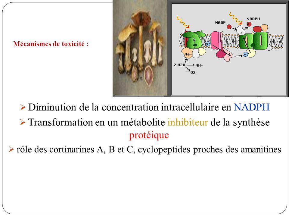 Diminution de la concentration intracellulaire en NADPH