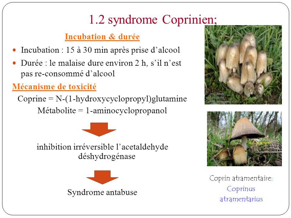 1.2 syndrome Coprinien; Incubation & durée