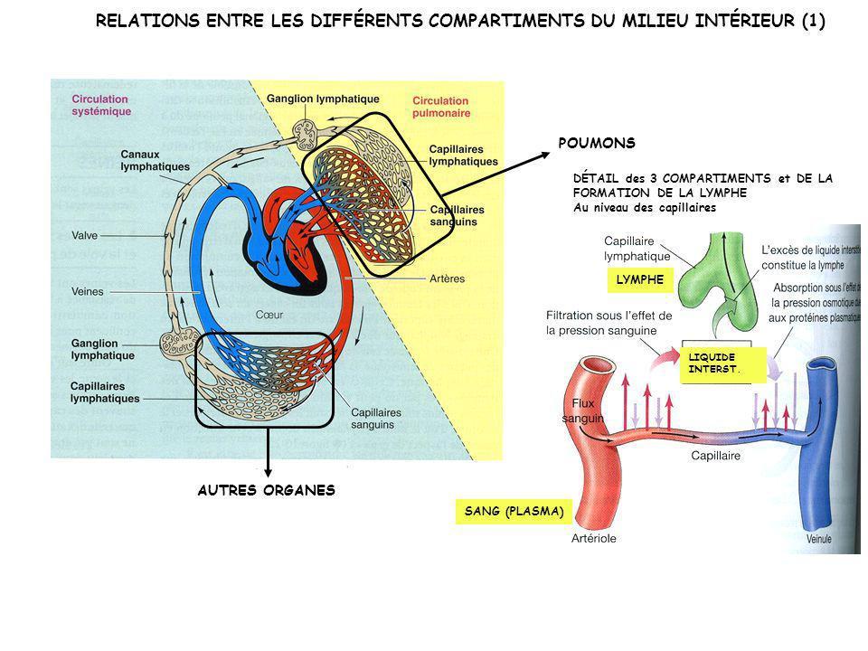RELATIONS ENTRE LES DIFFÉRENTS COMPARTIMENTS DU MILIEU INTÉRIEUR (1)