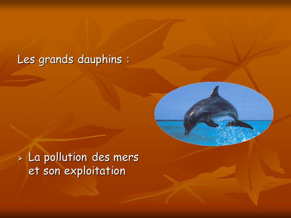 Les grands dauphins : La pollution des mers et son exploitation