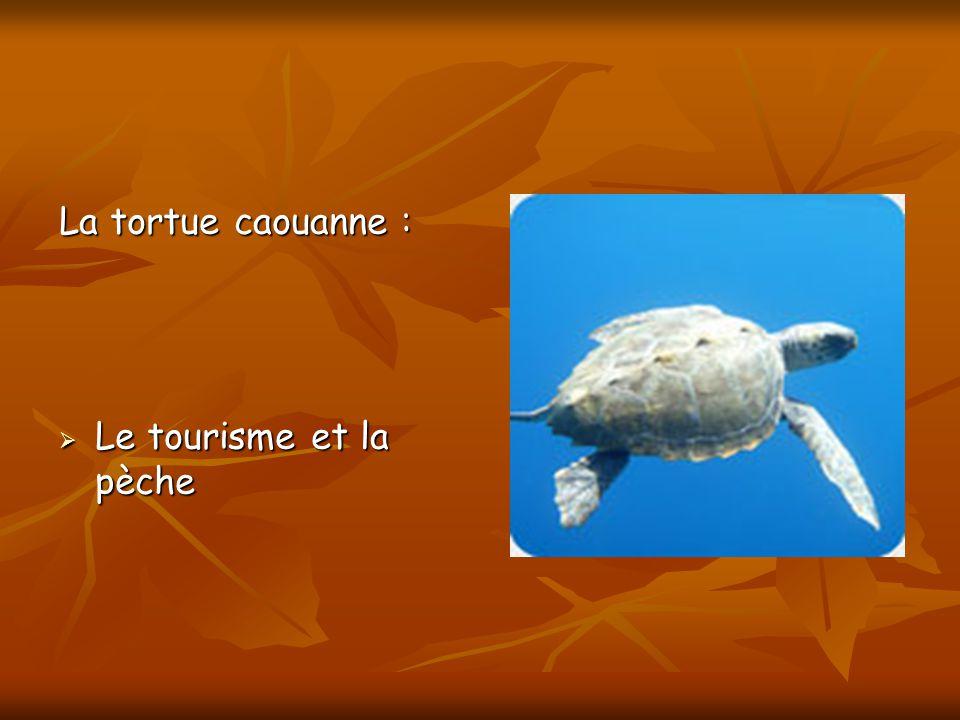 La tortue caouanne : Le tourisme et la pèche