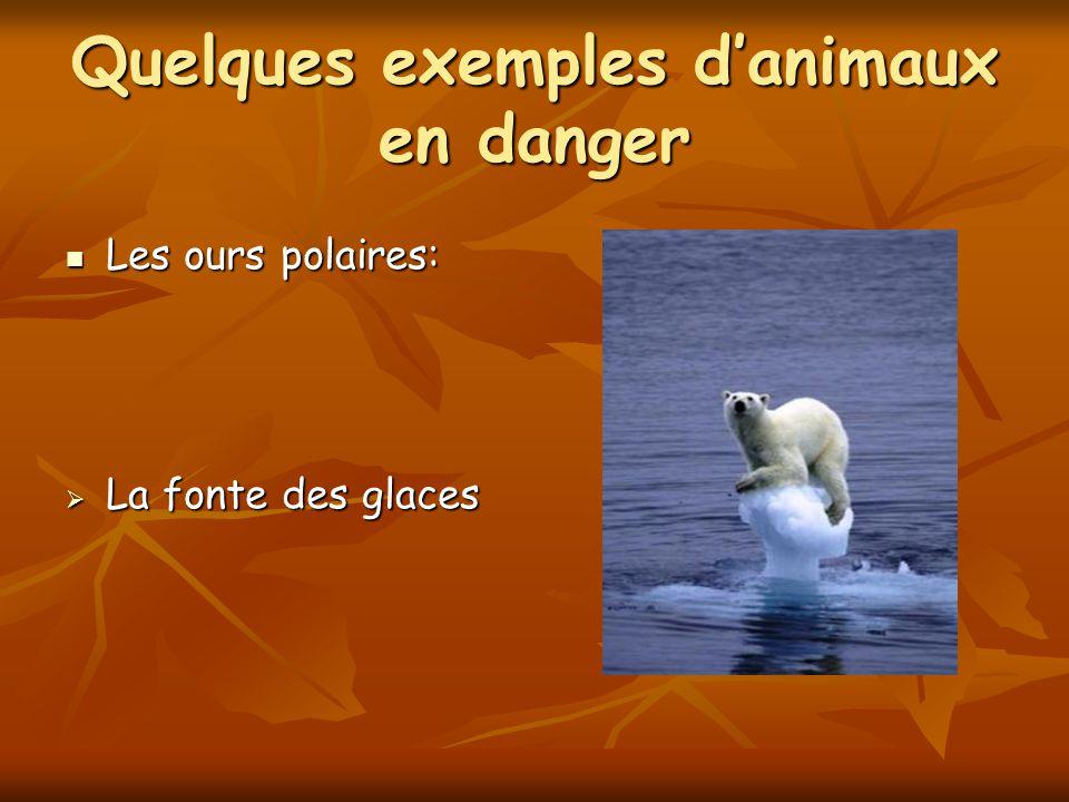 Quelques exemples d'animaux en danger