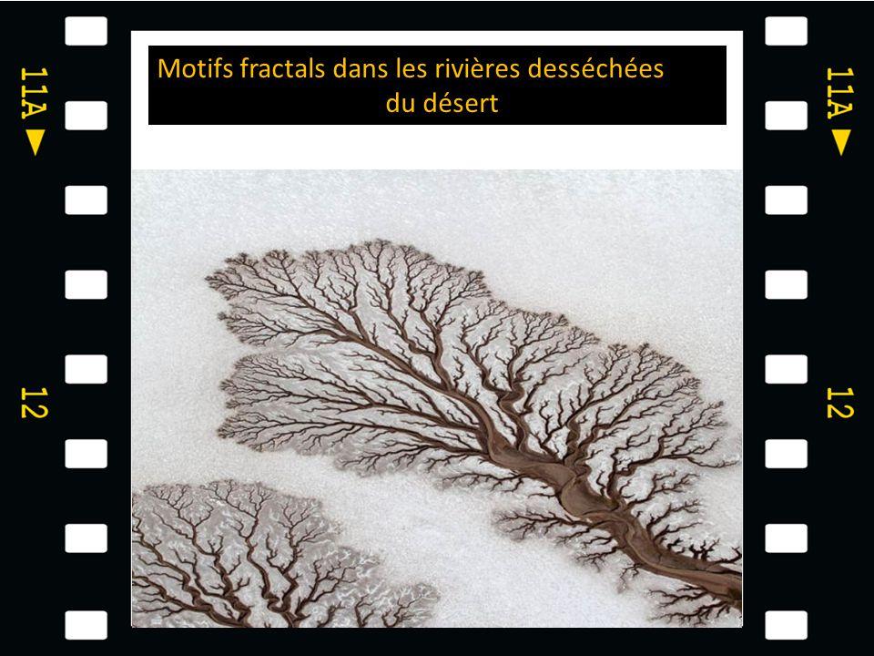 Motifs fractals dans les rivières desséchées