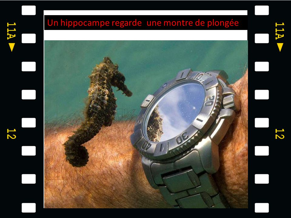 Un hippocampe regarde une montre de plongée