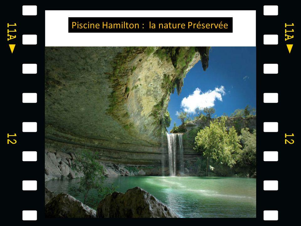 Piscine Hamilton : la nature Préservée