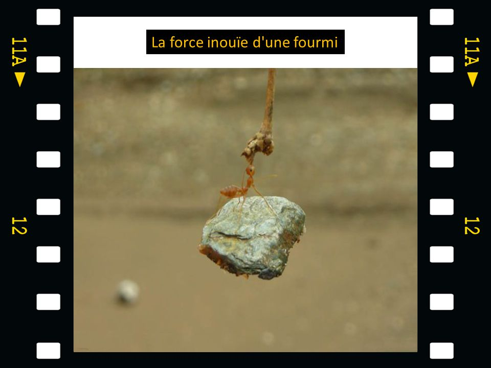 La force inouïe d une fourmi