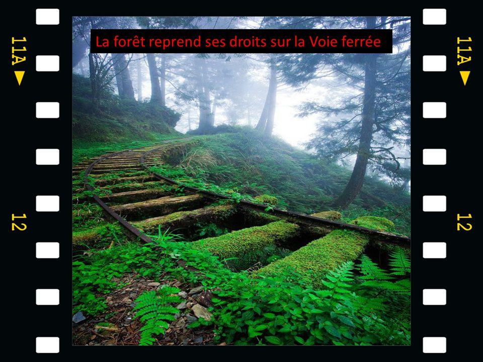 La forêt reprend ses droits sur la Voie ferrée