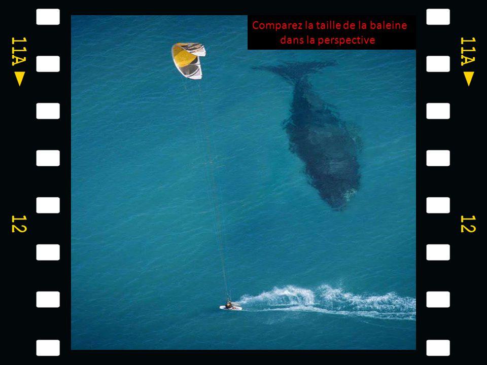 Comparez la taille de la baleine