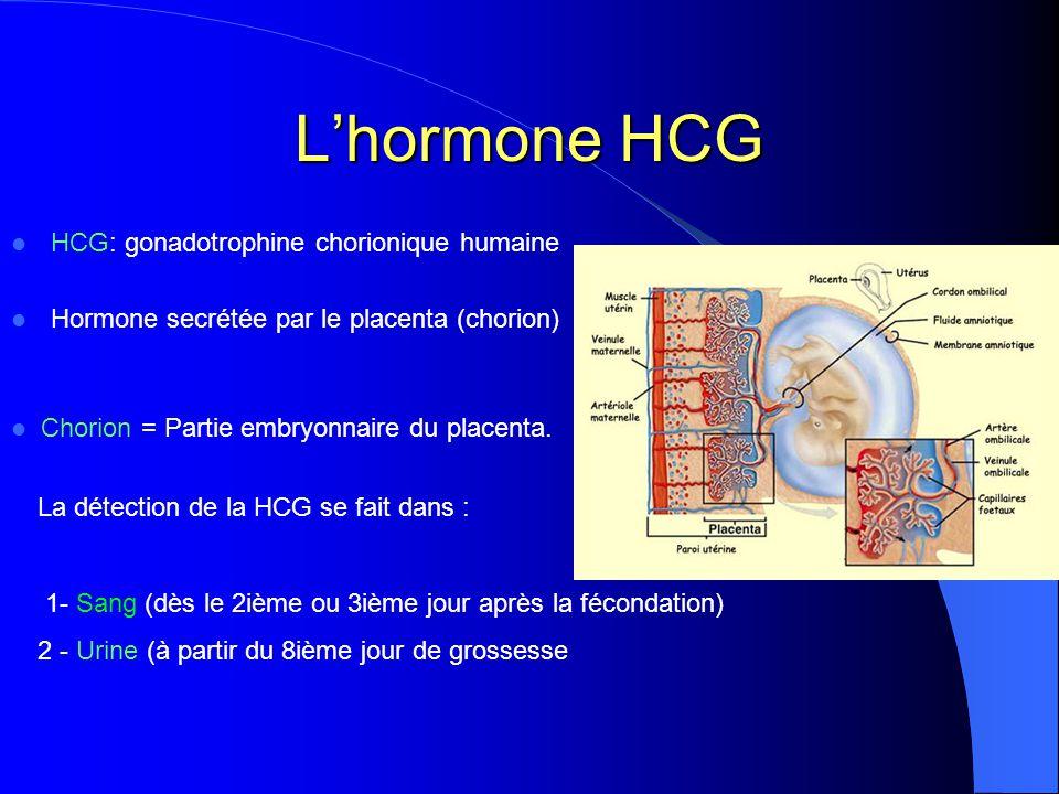 L'hormone HCG HCG: gonadotrophine chorionique humaine