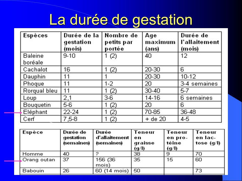 La durée de gestation Est-ce que vous avez une idée cobient dure la grossesse chez l'humain38 semaines.