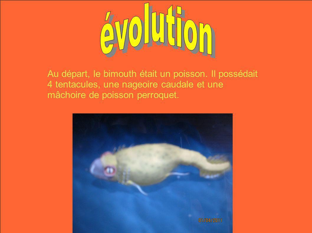 évolution Au départ, le bimouth était un poisson.