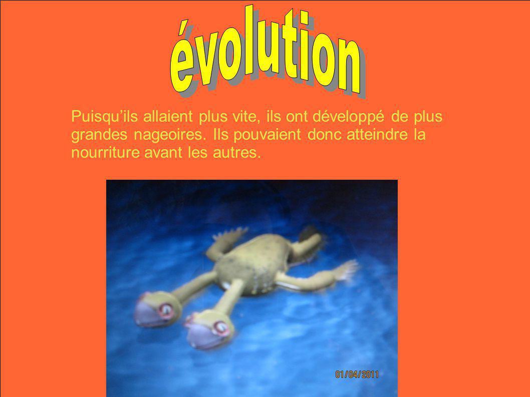 évolution Puisqu'ils allaient plus vite, ils ont développé de plus grandes nageoires.
