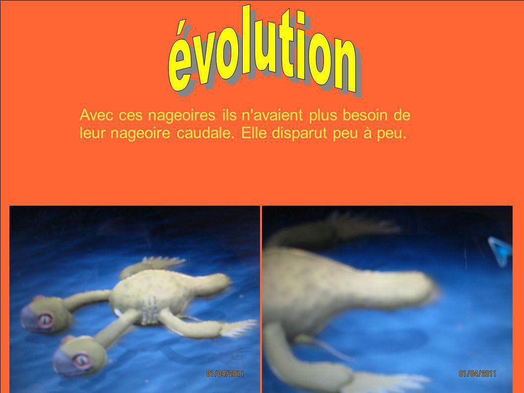 évolution Avec ces nageoires ils n avaient plus besoin de leur nageoire caudale.