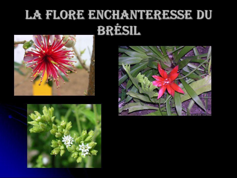 La Flore enchanteresse du Brésil