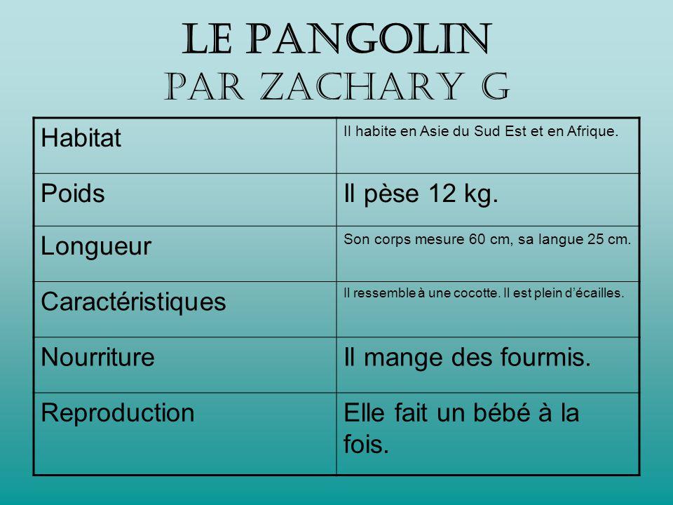 Le PANGOLIN par Zachary G