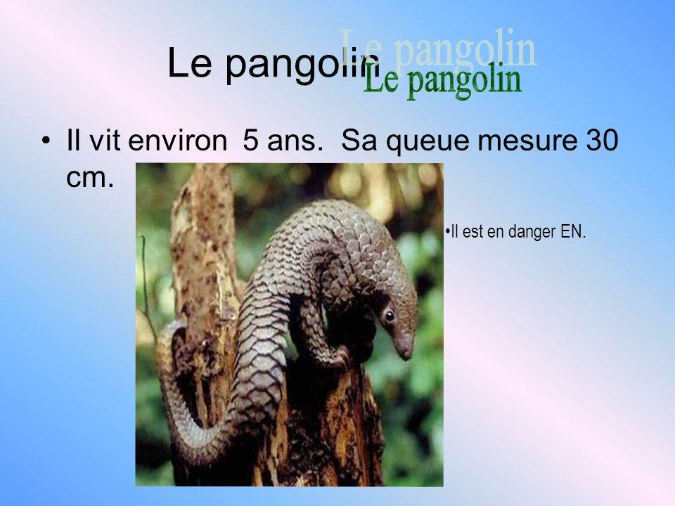 Le pangolin Le pangolin Il vit environ 5 ans. Sa queue mesure 30 cm.