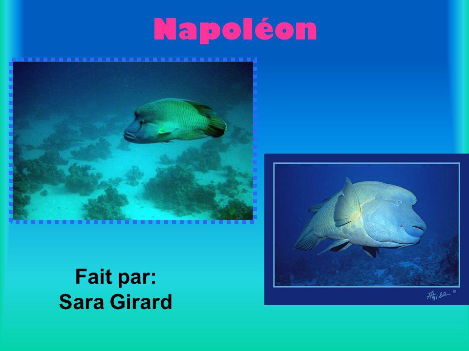 Napoléon Fait par: Sara Girard
