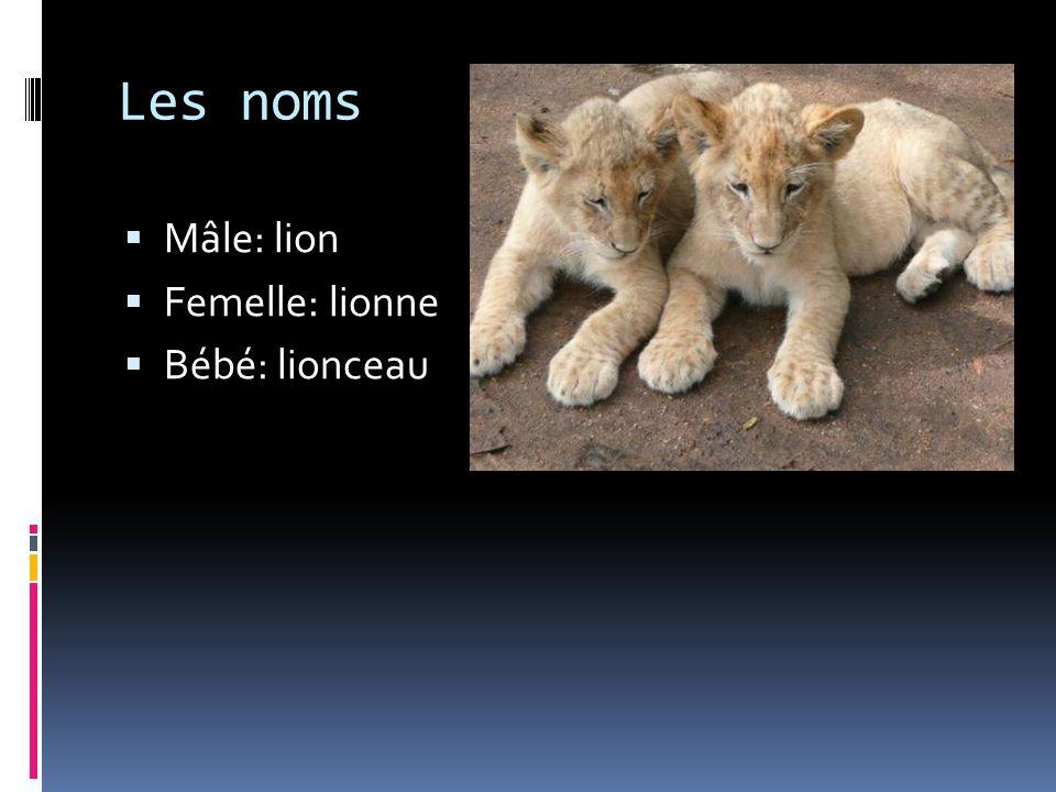 Les noms Mâle: lion Femelle: lionne Bébé: lionceau