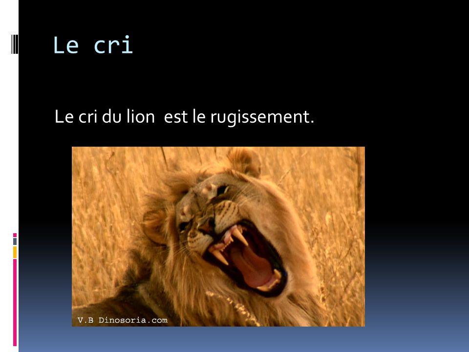 Le cri Le cri du lion est le rugissement.