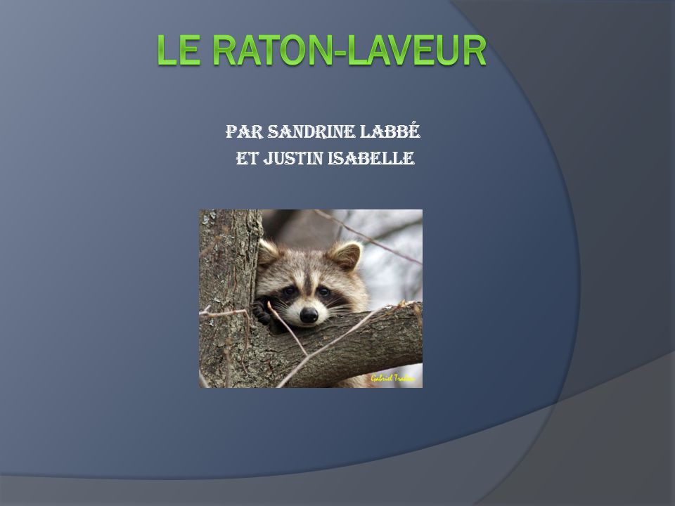 Par Sandrine Labbé et Justin Isabelle
