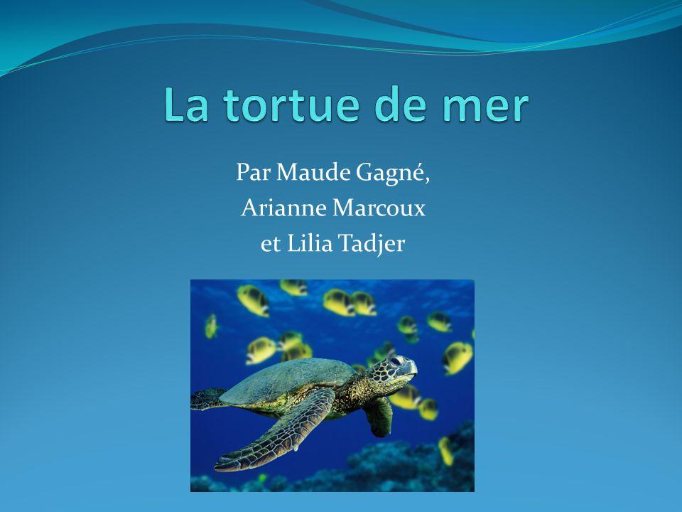 Par Maude Gagné, Arianne Marcoux et Lilia Tadjer