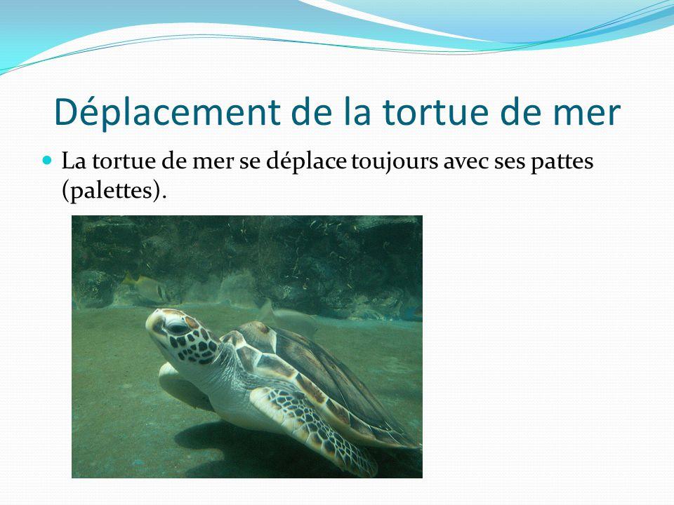 Déplacement de la tortue de mer