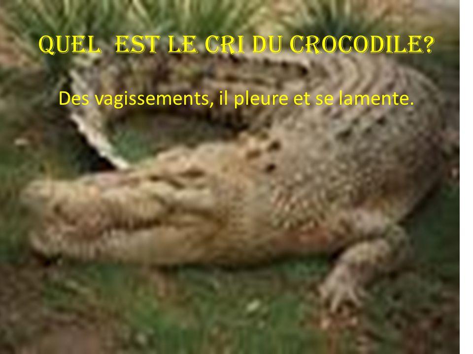 Quel est le cri du crocodile