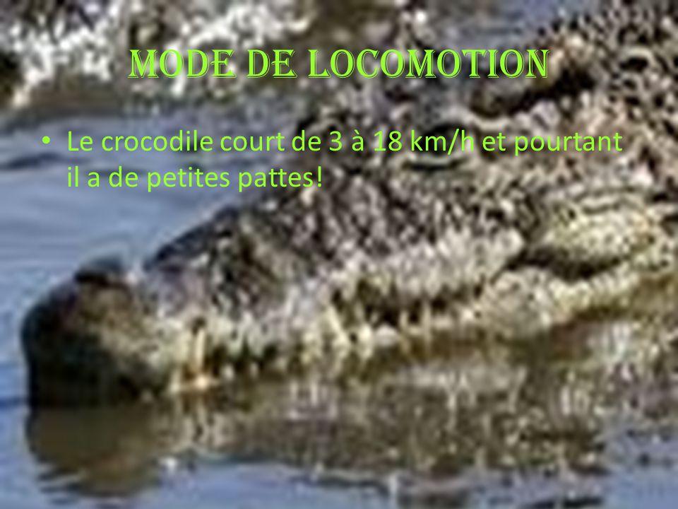 Mode de locomotion Le crocodile court de 3 à 18 km/h et pourtant il a de petites pattes!