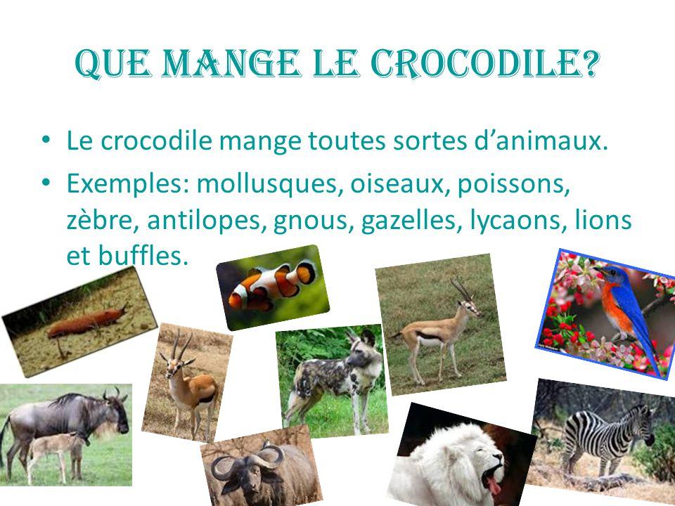 Que mange le crocodile Le crocodile mange toutes sortes d'animaux.