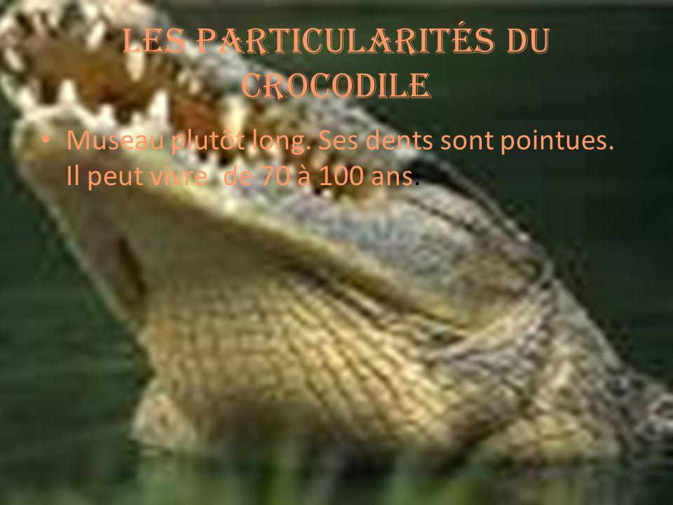 Les particularités du crocodile