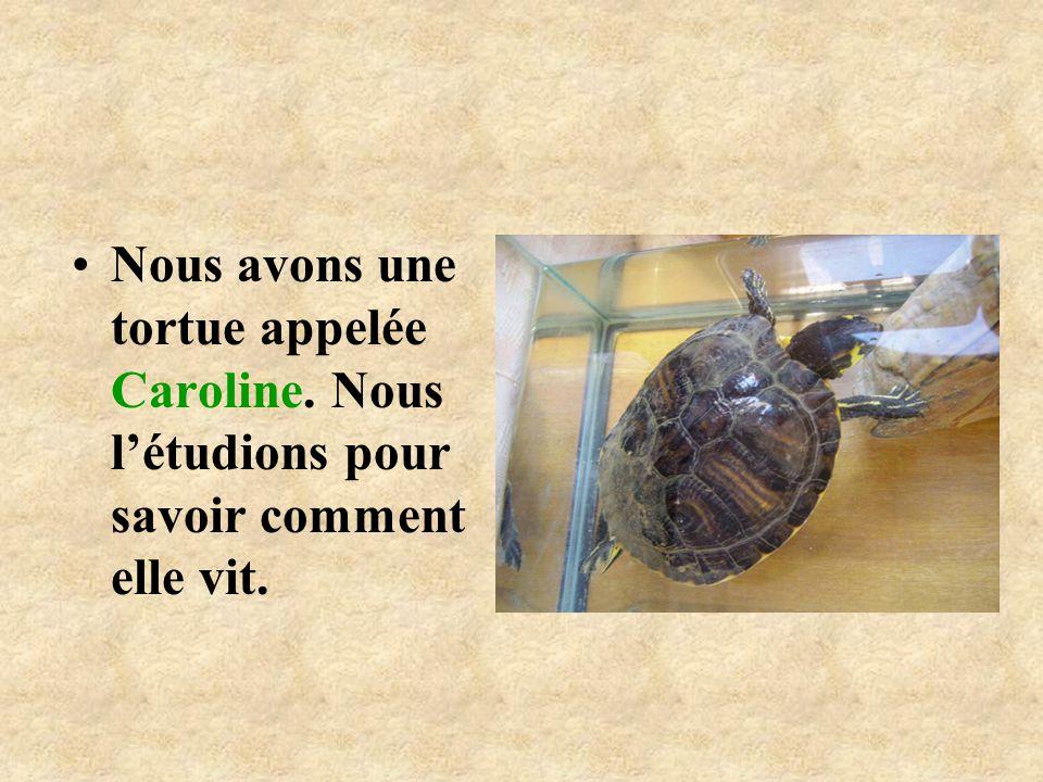 Nous avons une tortue appelée Caroline
