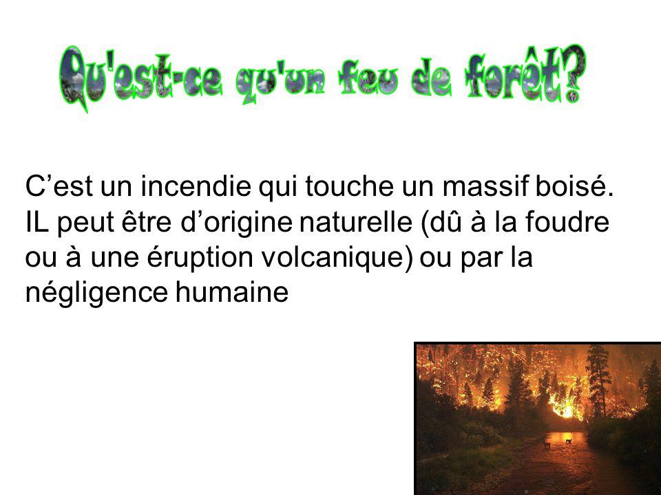 Qu est-ce qu un feu de forêt