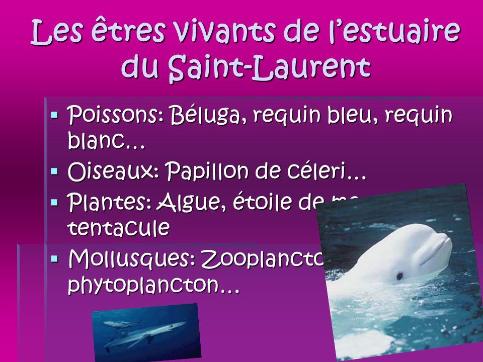 Les êtres vivants de l'estuaire du Saint-Laurent