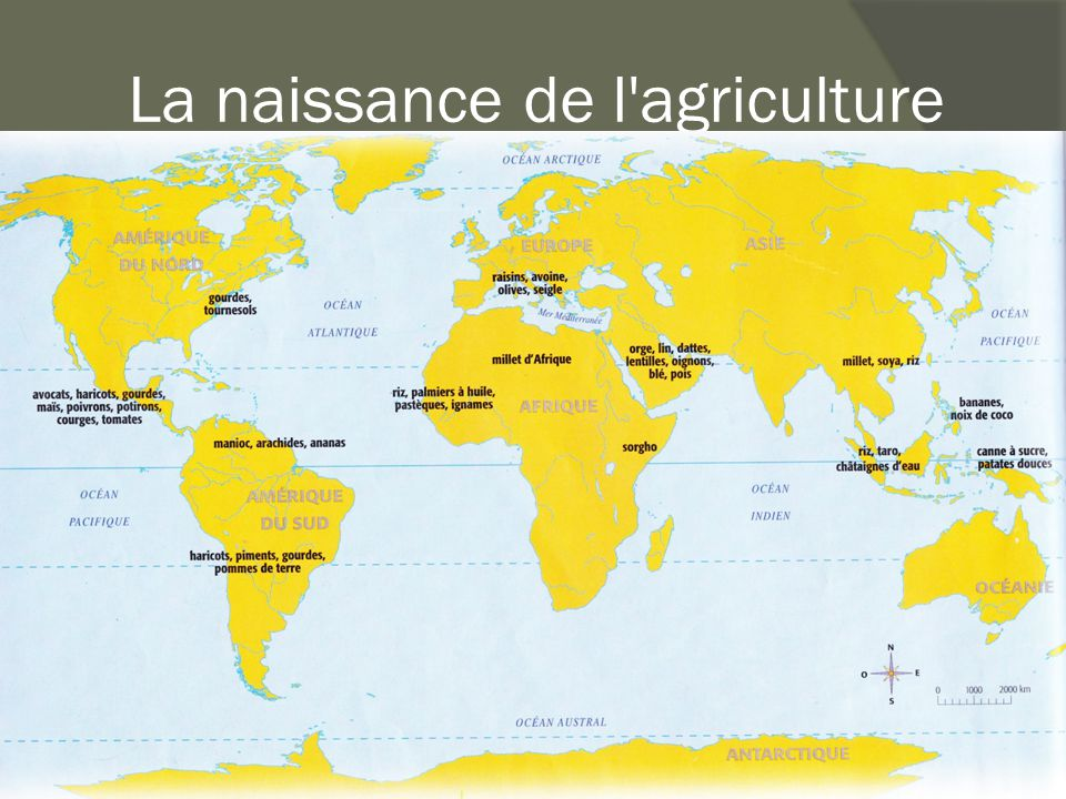 La naissance de l agriculture