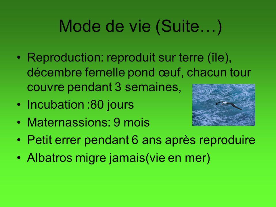 Mode de vie (Suite…) Reproduction: reproduit sur terre (île), décembre femelle pond œuf, chacun tour couvre pendant 3 semaines,