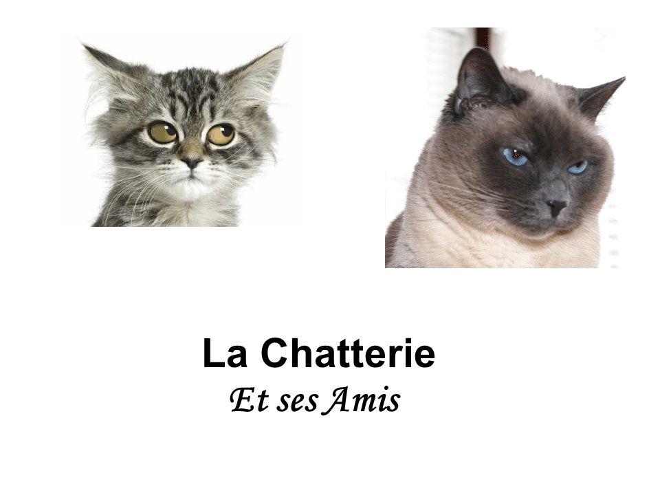La Chatterie Et ses Amis