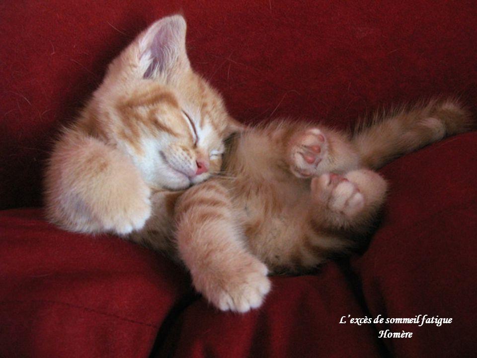 L'excès de sommeil fatigue