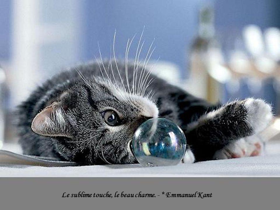 Le sublime touche, le beau charme. - * Emmanuel Kant