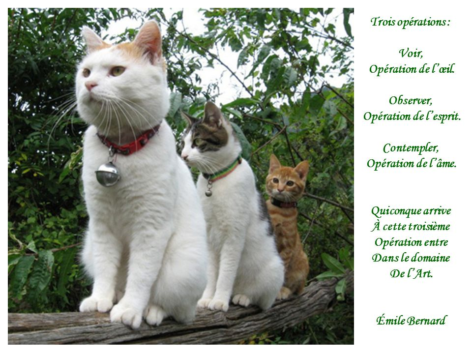 Trois opérations : Voir, Opération de l'œil. Observer, Opération de l'esprit. Contempler, Opération de l'âme.