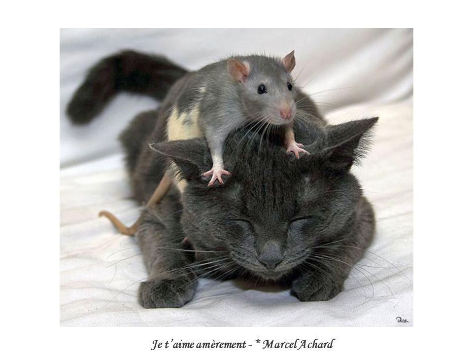 Je t'aime amèrement - * Marcel Achard