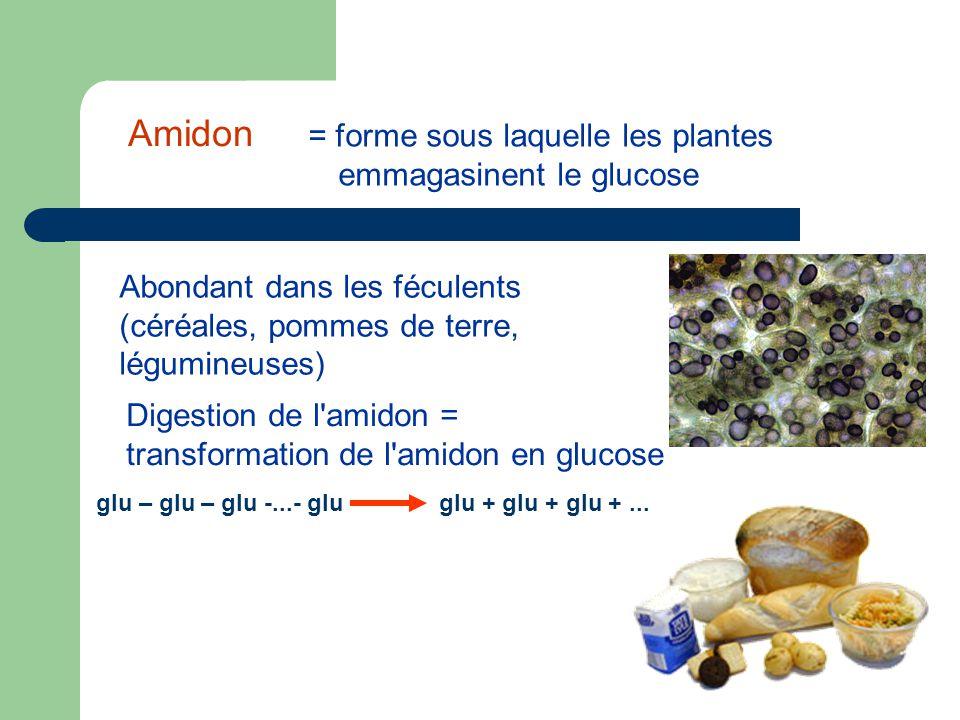 Amidon = forme sous laquelle les plantes emmagasinent le glucose