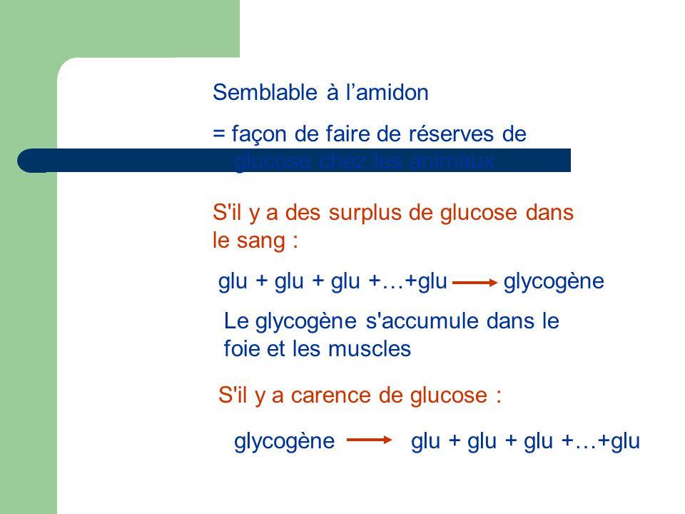 Semblable à l'amidon = façon de faire de réserves de glucose chez les animaux. S il y a des surplus de glucose dans le sang :