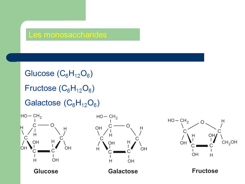 Les monosaccharides Glucose (C6H12O6) Fructose (C6H12O6) Galactose (C6H12O6)