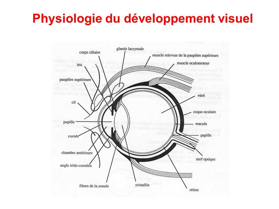 Physiologie du développement visuel