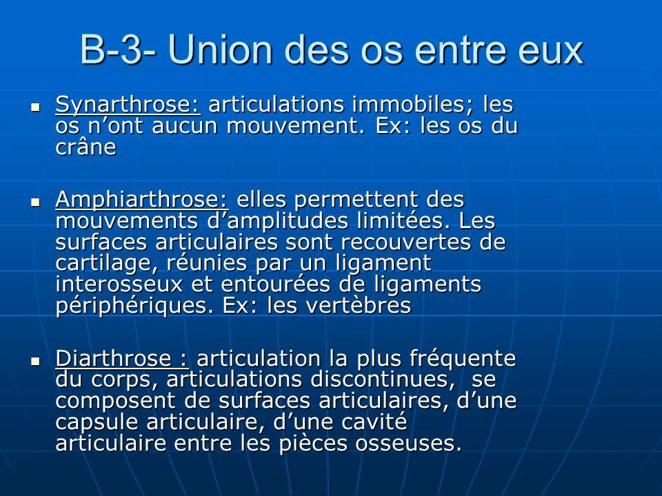 B-3- Union des os entre eux