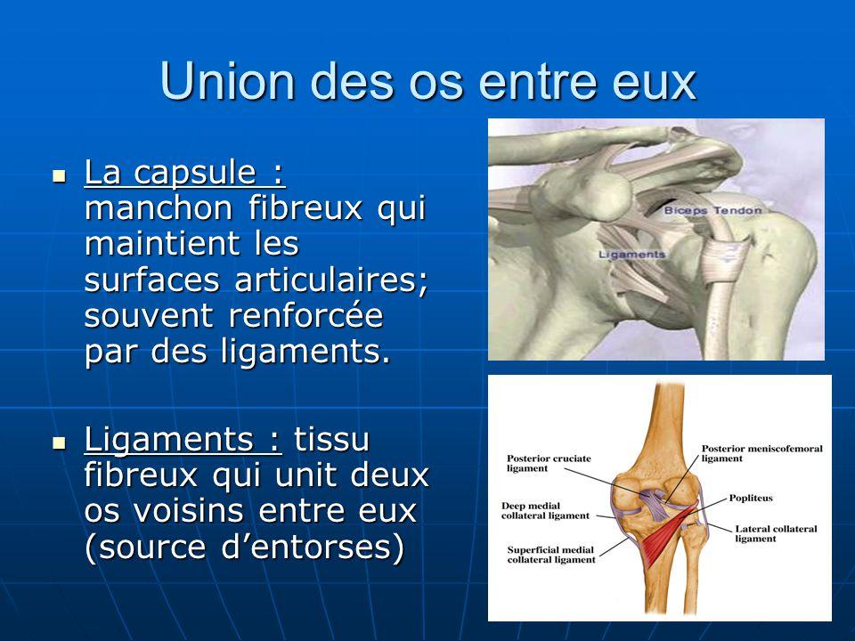Union des os entre eux La capsule : manchon fibreux qui maintient les surfaces articulaires; souvent renforcée par des ligaments.