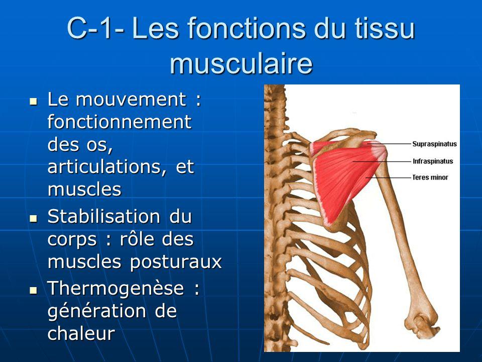 C-1- Les fonctions du tissu musculaire