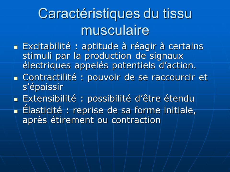 Caractéristiques du tissu musculaire